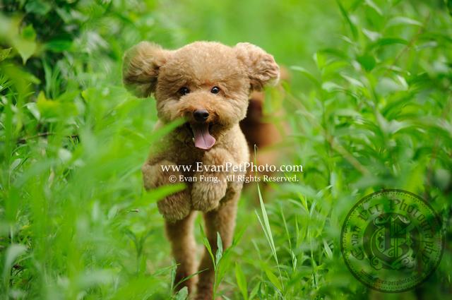 寵物攝影,專業寵物攝影,狗狗攝影,寵物攝影服務,攝影服務,戶外寵物攝影,戶外狗狗攝影,專業戶外寵物攝影