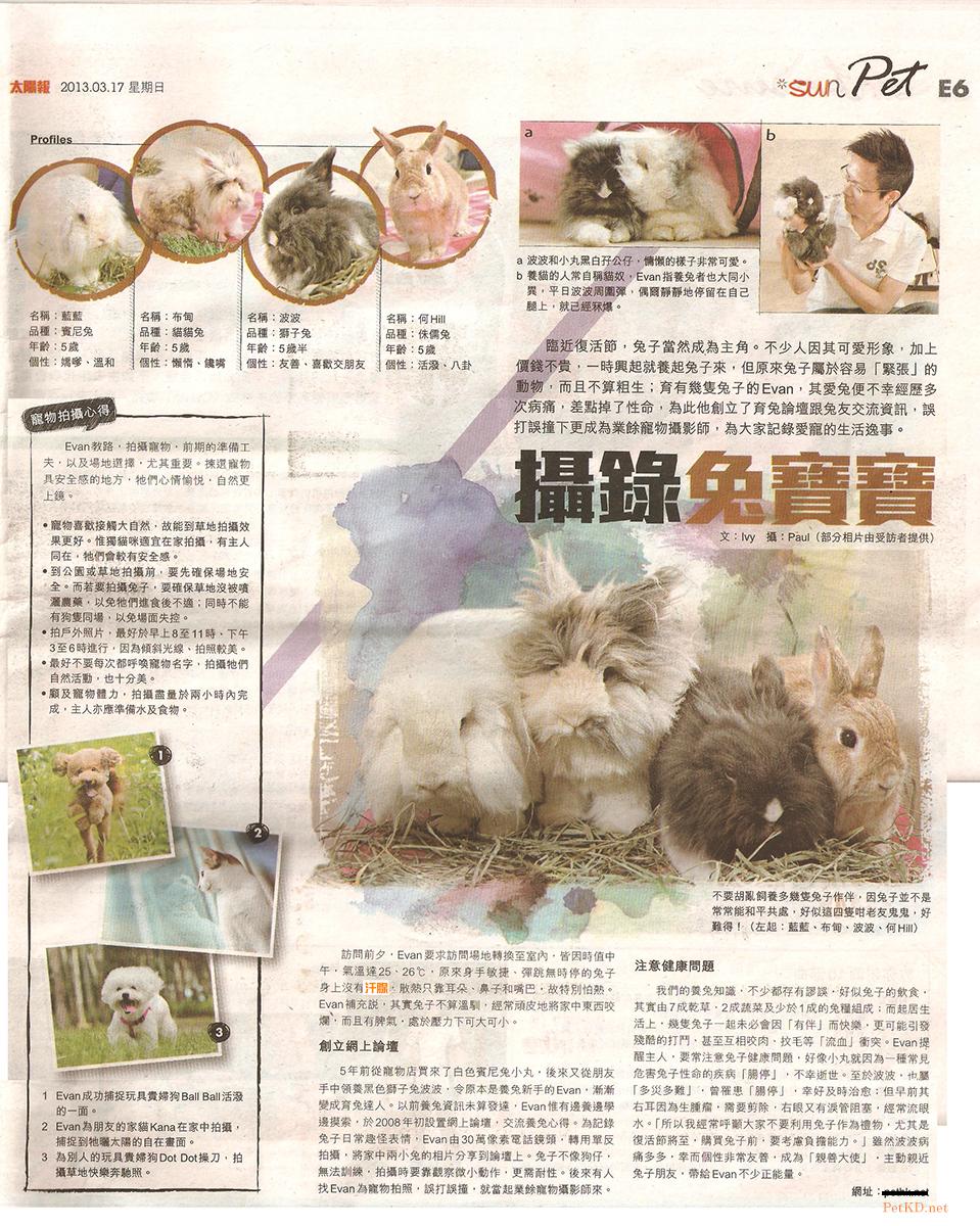 太陽日報 - 攝錄兔寶寶