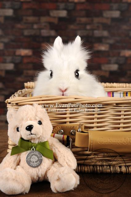 專業影樓,寵物攝影,專業寵物攝影,狗狗攝影,寵物攝影服務,攝影服務,專業寵物影樓,兔兔攝影,兔兔攝影服務