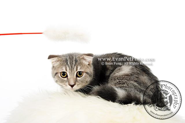 影樓 貓貓攝影