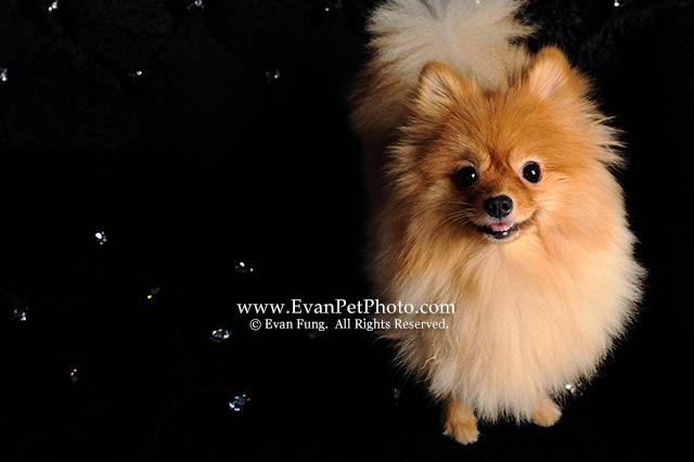 專業影樓,寵物攝影,專業寵物攝影,狗狗攝影,寵物攝影服務,攝影服務,專業寵物影樓