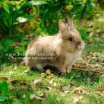 豆豆,獅子兔,兔兔攝影,寵物攝影,專業寵物攝影,寵物攝影服務,兔兔攝影服務