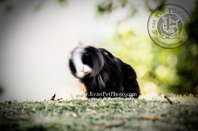 貓貓兔,兔兔攝影,寵物攝影,專業寵物攝影,寵物攝影服務,兔兔攝影服務,戶外寵物攝影