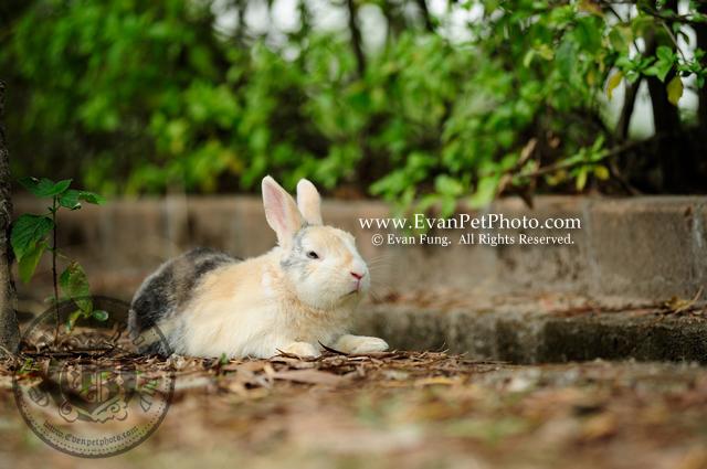 侏儒兔,兔兔攝影,寵物攝影,專業寵物攝影,寵物攝影服務,兔兔攝影服務,戶外寵物攝影