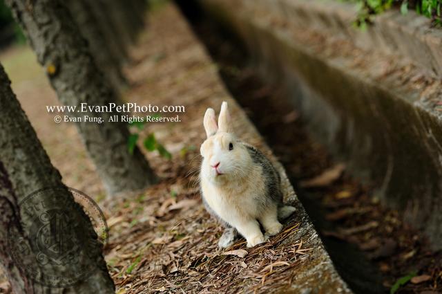傻B,侏儒兔,兔兔攝影,寵物攝影,專業寵物攝影,寵物攝影服務,兔兔攝影服務,戶外寵物攝影