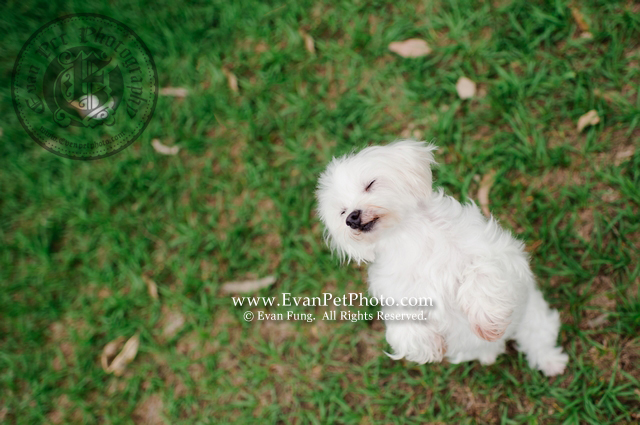寵物攝影,專業寵物攝影,狗狗攝影,寵物攝影服務,攝影服務,戶外寵物攝影,戶外狗狗攝影,專業戶外寵物攝影,魔天使,魔天使攝影
