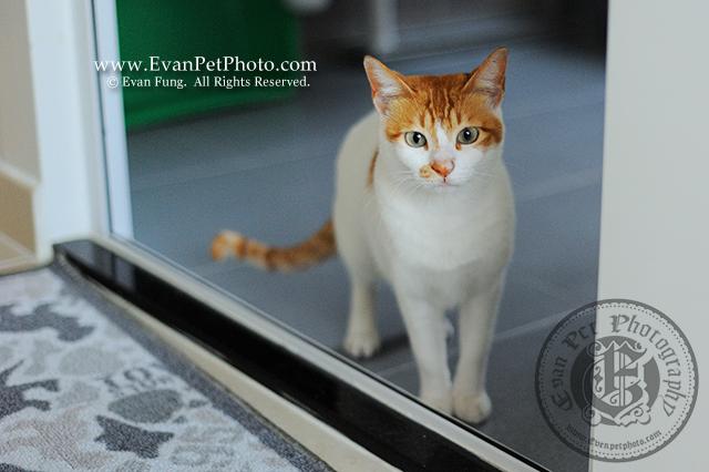 貓貓攝影,寵物攝影,專業寵物攝影,寵物攝影服務,貓貓攝影服務,上門寵物攝影,家居寵物攝影,家貓