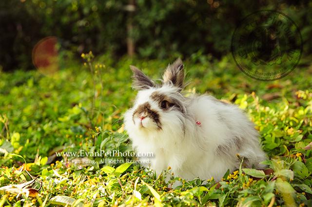 貓貓兔,兔兔攝影,寵物攝影,戶外寵物攝影,專業攝影服務,專業寵物攝影