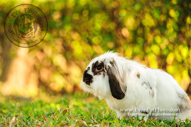 賓尼兔,兔兔攝影,寵物攝影,戶外寵物攝影,專業攝影服務,專業寵物攝影
