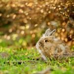 兔兔攝影, 寵物攝影, 專業寵物攝影, 戶外寵物攝影, 攝影服務,獅子兔