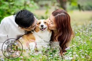 戶外寵物攝影, 專業寵物攝影,狗狗寫真, 寵物寫真, 攝影服務,哥基犬,哥基狗, Corgi寫真, Corgi攝影,哥基犬攝影,專業戶外攝影,專業狗狗攝影,戶外狗攝影,深涌, pre wedding, pre-wedding