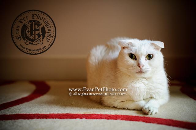 上門寵物攝影,貓貓攝影,上門貓攝影,cat photography, cat photographer,貓咪攝影,貓影樓,貓攝影師