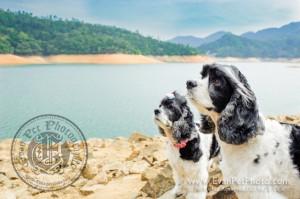 寵物攝影,寵物拍攝,專業寵物攝影,狗狗攝影,寵物寫真,寵物攝影服務,攝影服務,戶外寵物攝影,戶外狗狗攝影,專業戶外寵物攝影,香港寵物攝影,hong kong pet photographer, pet photography hong kong,寵物攝影師,香港寵物攝影師,dog photograph, hong kong dog photography, american cooker photography, outdoor pet photography hong kong,曲架攝影,american cooker, 城門水塘