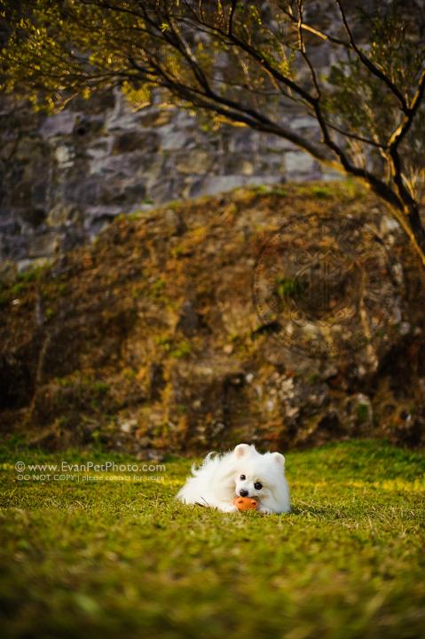 dog photo, dog photography, outdoor dog photography, hong kong pet photographer, pet photography hong kong, 狗攝影, 寵物寫真, 寵物攝影, 寵物攝影師, 寵物攝影服務, 專業寵物攝影, 專業戶外寵物攝影, 戶外寵物攝影, 戶外狗狗攝影, 攝影服務, 松鼠狗, 松鼠狗攝影, 狗狗攝影, 香港寵物攝影師