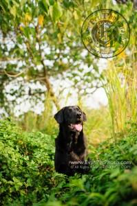 寵物攝影,專業寵物攝影,狗狗攝影,寵物寫真,寵物攝影服務,攝影服務,戶外寵物攝影,戶外狗狗攝影,專業戶外寵物攝影,hong kong pet photographer, pet photography hong kong,outdoor pet photography hong kong,寵物攝影師,香港寵物攝影師,拉布拉多犬,拉布拉多,拉布拉多攝影