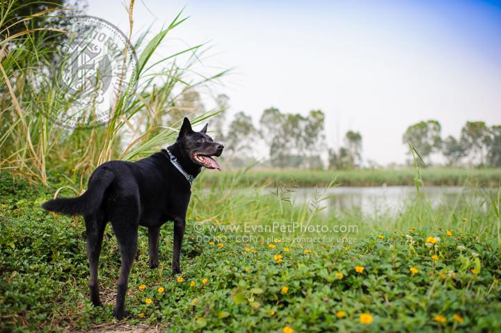 寵物攝影,寵物拍攝,專業寵物攝影,狗狗攝影,寵物寫真,寵物攝影服務,攝影服務,戶外寵物攝影,戶外狗狗攝影,專業戶外寵物攝影,香港寵物攝影,hong kong pet photographer, pet photography hong kong,寵物攝影師,香港寵物攝影師,dog photograph, hong kong dog photography, outdoor pet photography hong kong, 唐狗,唐狗攝影