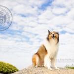 寵物攝影,寵物拍攝,專業寵物攝影,狗狗攝影,寵物寫真,寵物攝影服務,攝影服務,戶外寵物攝影,戶外狗狗攝影,專業戶外寵物攝影,香港寵物攝影,hong kong pet photographer, pet photography hong kong,寵物攝影師,香港寵物攝影師,dog photograph, hong kong dog photography, 牧羊,牧羊犬, 邊境牧羊, outdoor pet photography hong kong, 彭福公園, sheep dog