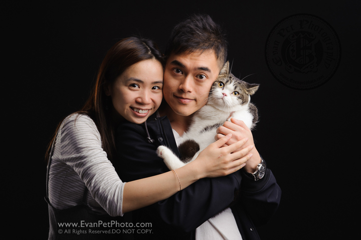 cat Photography, Studio cat Photography, 影樓寵物攝影, 貓影樓, cat photography, 英國短毛貓攝影, 寵物攝影, 寵物影樓, cat studio, 香港寵物影樓, hong kong cat studio, pet studio, British Short Hair cat, 英國短毛貓