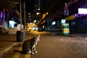 cat photo, street cat, 街貓