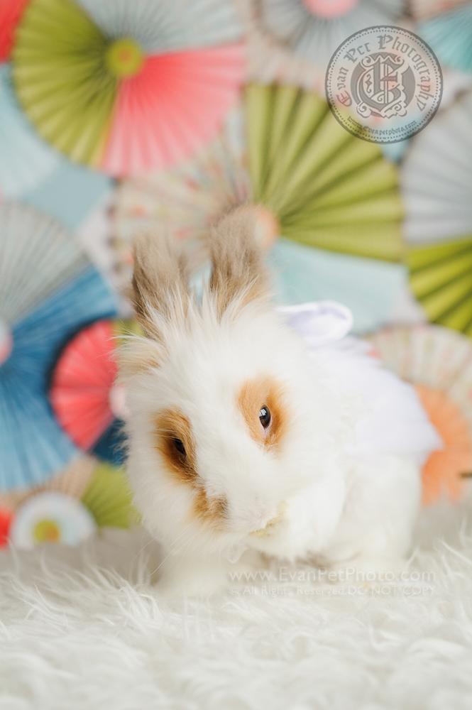 rabbit photography, bunny photography, rabbit photo, bunny picture. bunny studio, rabbit studio, 兔攝影, 兔兔攝影, 兔影樓, 兔仔影樓, 兔仔攝影, 賓尼兔, 賓尼兔攝影, 兔兔攝影香港, 自然光