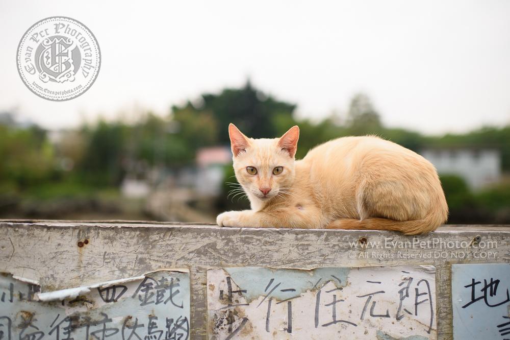 cat, cat photography, wild, cat photo, 貓貓攝影, 家貓