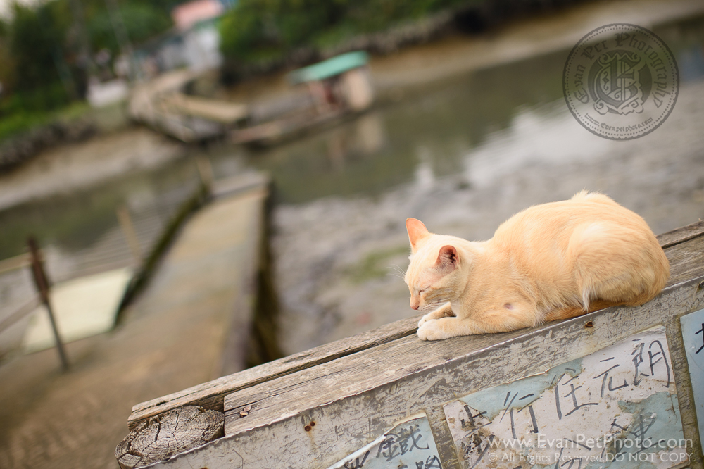 cat, cat photography, wild, cat photo, 貓貓攝影, 家貓
