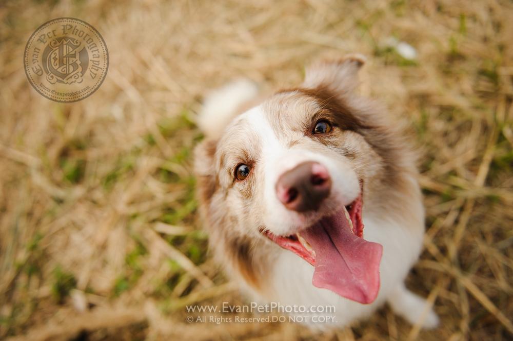 寵物攝影,寵物拍攝,專業寵物攝影,狗狗攝影,寵物寫真,寵物攝影服務,攝影服務,戶外寵物攝影,戶外狗狗攝影,專業戶外寵物攝影,香港寵物攝影,hong kong pet photographer, pet photography hong kong,寵物攝影師,香港寵物攝影師,dog photograph, hong kong dog photography, outdoor pet photography hong kong,拉布拉多
