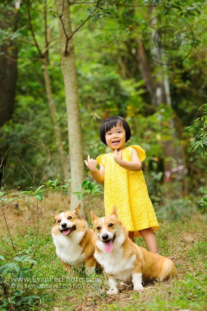 寵物攝影師,香港寵物攝影師, 哥基,哥基犬,哥基攝影, 寵物攝影,專業寵物攝影,狗狗攝影,寵物寫真,寵物攝影服務,攝影服務,戶外寵物攝影,戶外狗狗攝影,戶外哥基攝影,專業戶外寵物攝影,hong kong pet photographer, pet photography hong kong,outdoor pet photography hong kong, dog photo, dog picture, dog photography, hong kong dog photography,  outdoor dog photography,Welsh Corgi,Corgi, Welsh Corgi photo, Welsh Corgi photography,城門水塘