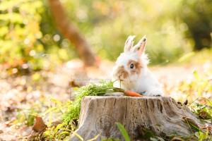 rabbit photo, rabbit photography, bunny photo, rabbit picture, outdoor rabbit photography, hong kong pet photographer, 戶外兔攝影, 兔攝影, 兔寫真, 寵物攝影, 寵物攝影師, 寵物攝影服務, 戶外寵物攝影, 獅子兔, 獅子兔攝影, 香港寵物攝影師, 紅葉