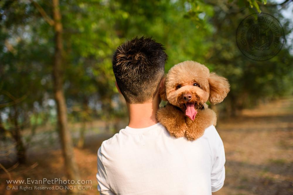 寵物攝影師,香港寵物攝影師, 寵物攝影,專業寵物攝影,狗狗攝影,寵物寫真,寵物攝影服務,攝影服務,戶外寵物攝影,戶外狗狗攝影,戶外哥基攝影,專業戶外寵物攝影, hong kong pet photographer, pet photography hong kong,outdoor pet photography hong kong, dog photo, dog picture, dog photography, hong kong dog photography,  outdoor dog photography, 玩具貴婦,貴婦犬,貴婦狗,poodle, poodle photography,  南生圍