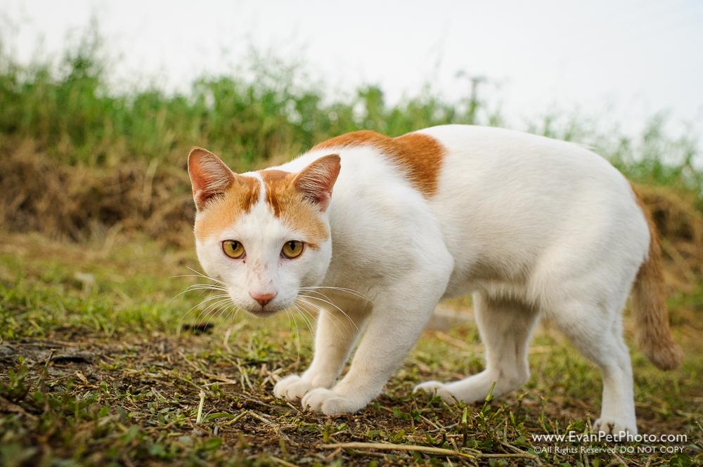 Cat, Catching, Wild Cat, Cat Jump