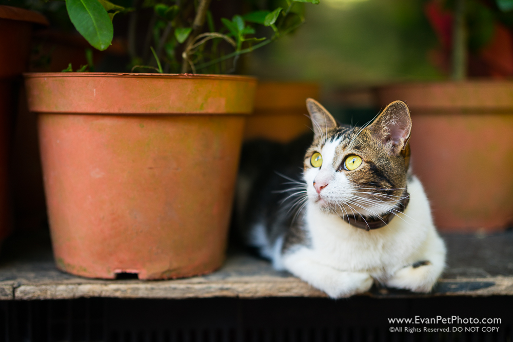 Sony A9, Zeiss Planar, 50mm, F1.4, Review,cat photo
