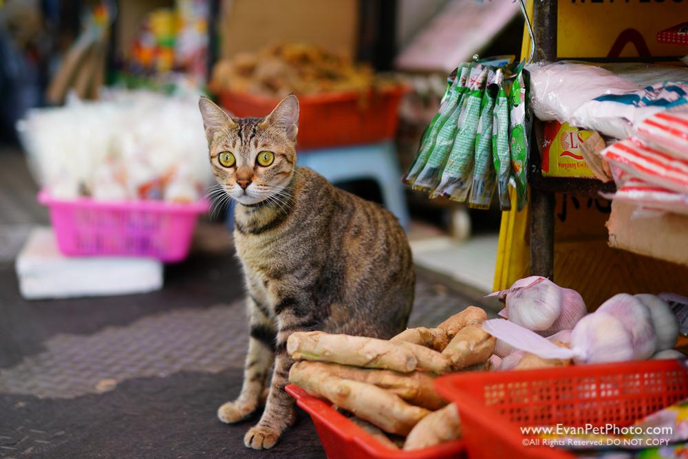 street cat, shop cat