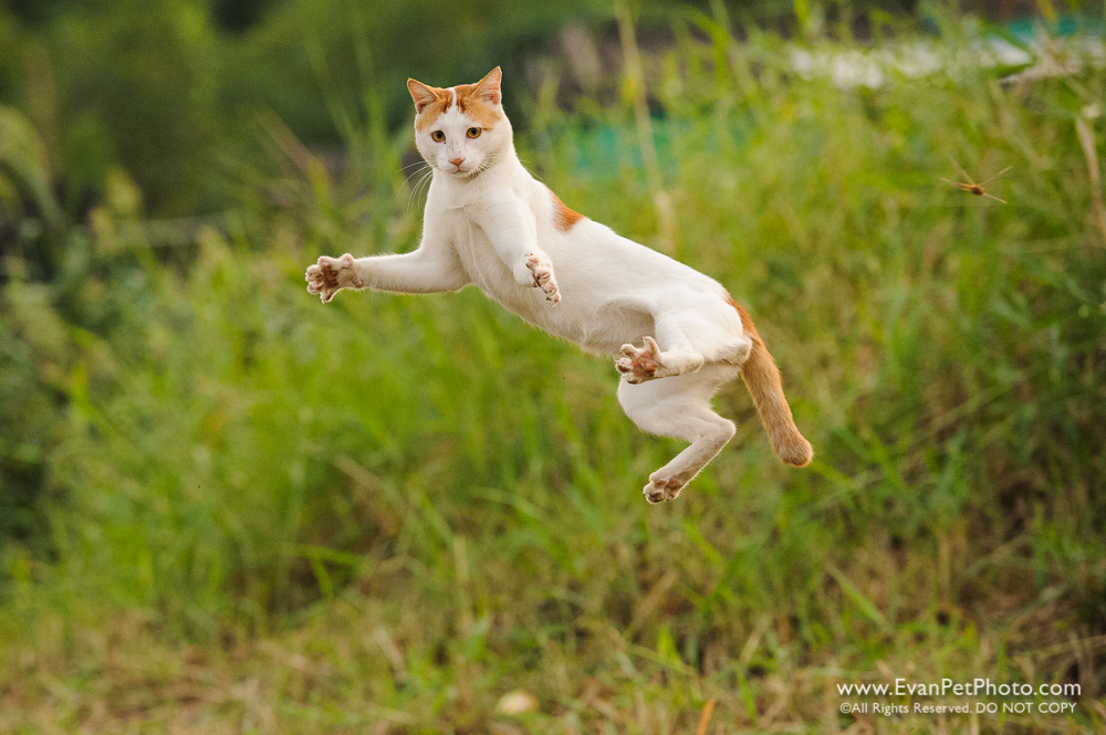 Cat, Catching, Wild Cat, Cat Jump