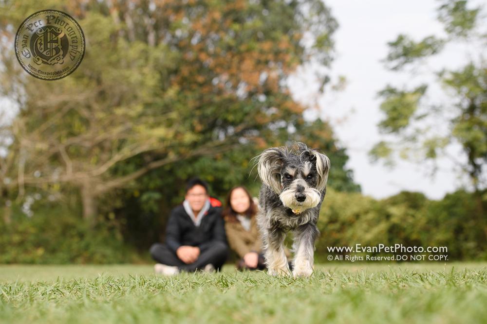 寵物攝影師,香港寵物攝影師, 寵物攝影,專業寵物攝影,狗狗攝影,寵物寫真,寵物攝影服務,攝影服務,戶外寵物攝影,戶外狗狗攝影,專業戶外寵物攝影, hong kong pet photographer, pet photography hong kong,outdoor pet photography hong kong, dog photo, dog picture, dog photography, hong kong dog photography, outdoor dog photography, 史納莎,南生圍
