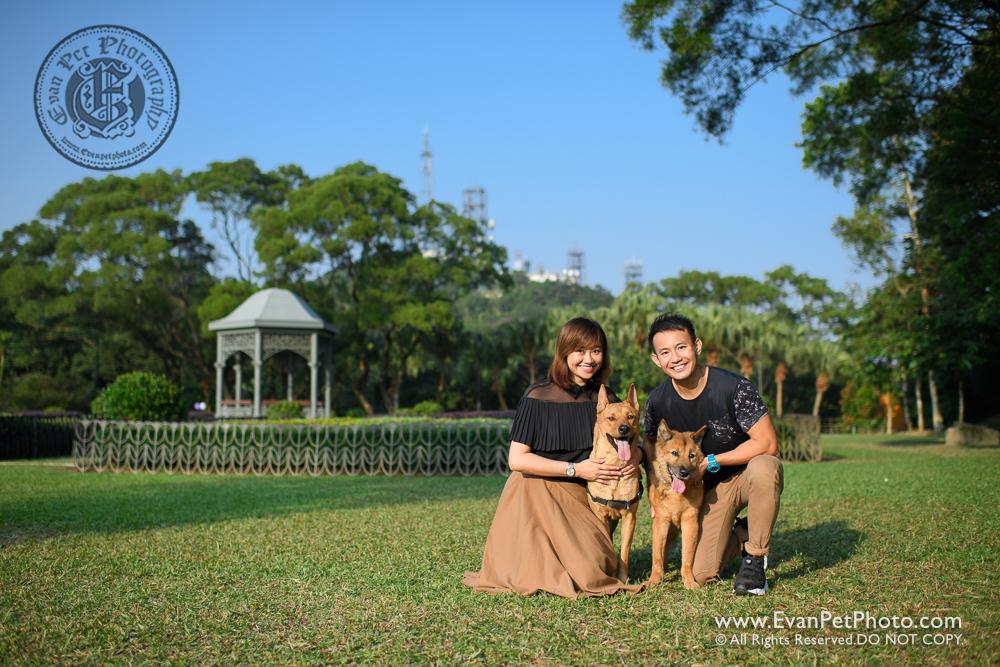 dog photo, dog photography, outdoor dog photography, 寵物攝影,專業寵物攝影,狗狗攝影,寵物寫真,寵物攝影服務,攝影服務,戶外寵物攝影,戶外狗狗攝影,專業戶外寵物攝,香港寵物攝影,唐狗攝影,唐狗