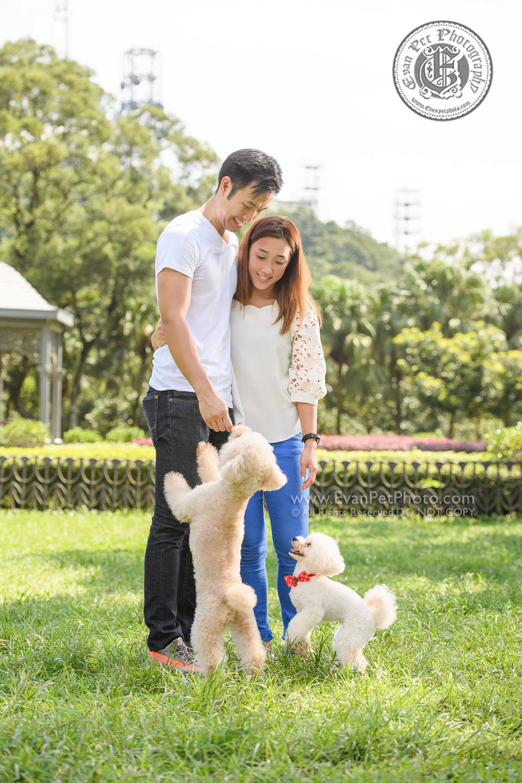 dog photo, dog photography, outdoor dog photography, 寵物攝影,專業寵物攝影,狗狗攝影,寵物寫真,寵物攝影服務,攝影服務,戶外寵物攝影,戶外狗狗攝影,專業戶外寵物攝,香港寵物攝影,poodle,貴婦犬,poodle攝影,poodle戶外攝影,貴婦狗攝影