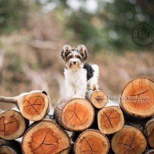 dog photo, dog photography, outdoor dog photography, 寵物攝影,專業寵物攝影,狗狗攝影,寵物寫真,寵物攝影服務,攝影服務,戶外寵物攝影,戶外狗狗攝影,專業戶外寵物攝,香港寵物攝影,==