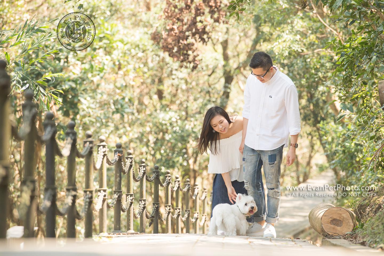 dog photo, dog photography, outdoor dog photography, 寵物攝影,專業寵物攝影,狗狗攝影,寵物寫真,寵物攝影服務,攝影服務,戶外寵物攝影,戶外狗狗攝影,專業戶外寵物攝,香港寵物攝影,白爹利,white westie,casual prewedding with dog