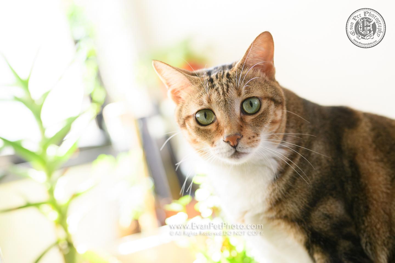 貓貓攝影, 影貓, 上門影貓, 貓影樓, 寵物攝影, 上門寵物攝影,cat photography, cat photo