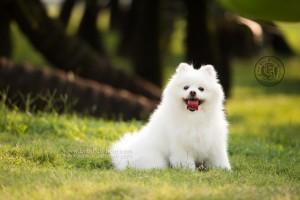 dog photo, dog photography, outdoor dog photography, 寵物攝影,專業寵物攝影,狗狗攝影,寵物寫真,寵物攝影服務,攝影服務,戶外寵物攝影,戶外狗狗攝影,專業戶外寵物攝,香港寵物攝影,松鼠犬,日曆拍攝