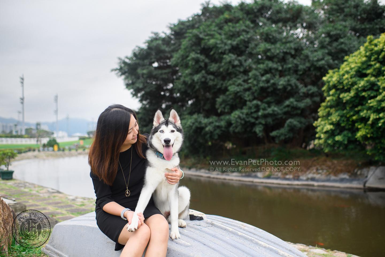 dog photo, dog photography, outdoor dog photography, dog picture, pet photography, pet photographer, dog photographer, hong kong, 寵物攝影,專業寵物攝影,狗狗攝影,寵物寫真,寵物攝影服務,攝影服務,戶外寵物攝影,戶外狗攝影,戶外攝影,戶外狗狗攝影,專業戶外寵物攝影,香港寵物攝影, hong kong pet photographer, 香港寵物攝影師,彭福公園,husky,哈士奇,雪橇犬攝影