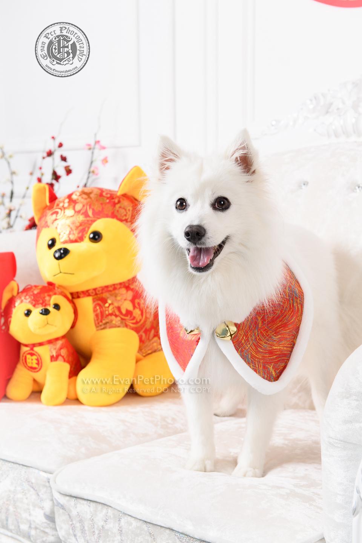 寵物攝影,寵物拍攝,專業寵物攝影,狗狗攝影,寵物寫真,寵物攝影服務,,香港寵物攝影,hong kong pet photographer, pet photography hong kong,寵物攝影師,香港寵物攝影師,dog photography, hong kong dog photography, dog studio, pet studio, dog photographer hong kong,銀狐犬,銀狐,poodle,poodle攝影,銀狐攝影