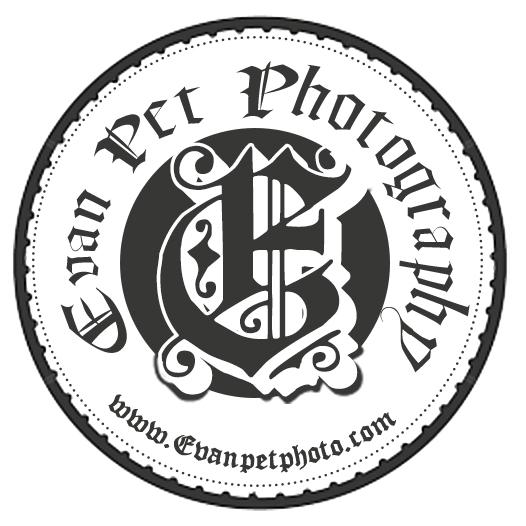 Evan Pet Photo 專業寵物攝影