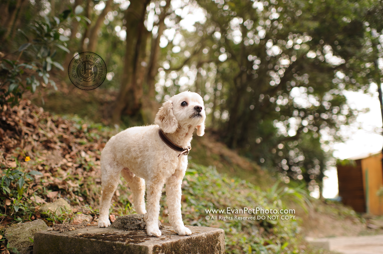 dog photo, dog photography, outdoor dog photography, dog picture, pet photography, pet photographer, dog photographer, hong kong, 寵物攝影,專業寵物攝影,狗狗攝影,寵物寫真,寵物攝影服務,攝影服務,戶外寵物攝影,戶外狗攝影,戶外攝影,戶外狗狗攝影,專業戶外寵物攝影,香港寵物攝影, hong kong pet photographer, 香港寵物攝影師,山頂公園