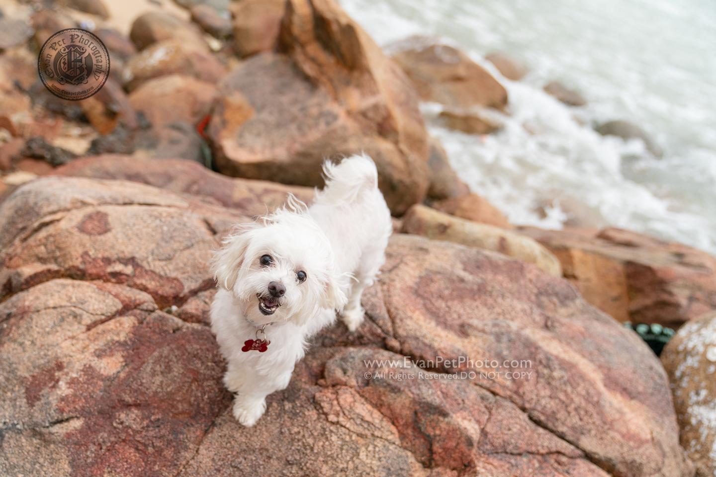 dog photo, dog photography, outdoor dog photography, dog picture, pet photography, pet photographer, dog photographer, hong kong, 寵物攝影,專業寵物攝影,狗狗攝影,寵物寫真,寵物攝影服務,攝影服務,戶外寵物攝影,戶外狗攝影,戶外攝影,戶外狗狗攝影,專業戶外寵物攝影,香港寵物攝影, hong kong pet photographer, 香港寵物攝影師,魔天使, 石澳, 石澳攝影