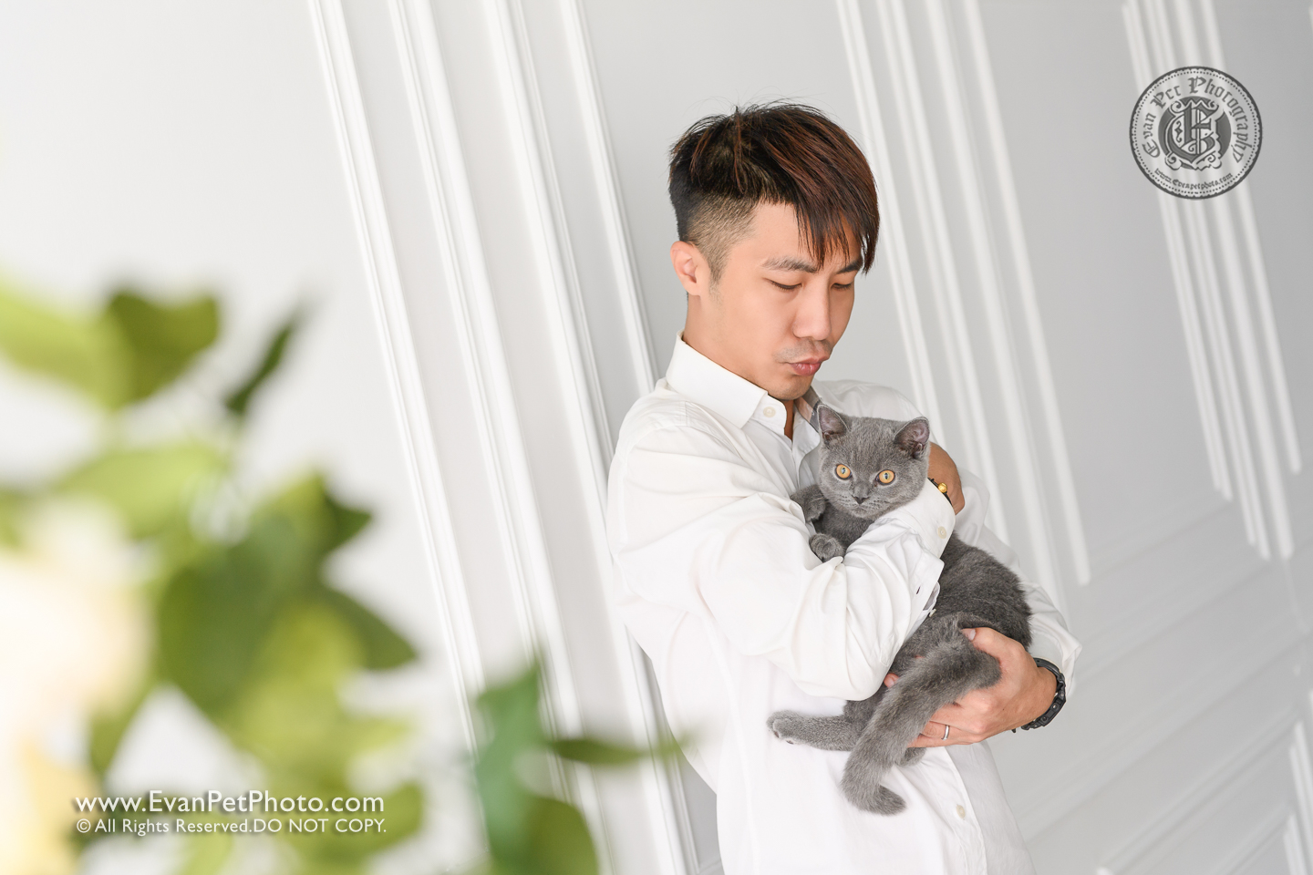 cat Photography, Studio cat Photography, 影樓寵物攝影, 貓影樓, cat photography, 英國短毛貓攝影, 寵物攝影, 寵物影樓, cat studio, 香港寵物影樓, hong kong cat studio, pet studio, British Short Hair cat, 英國短毛貓, 異國短毛貓
